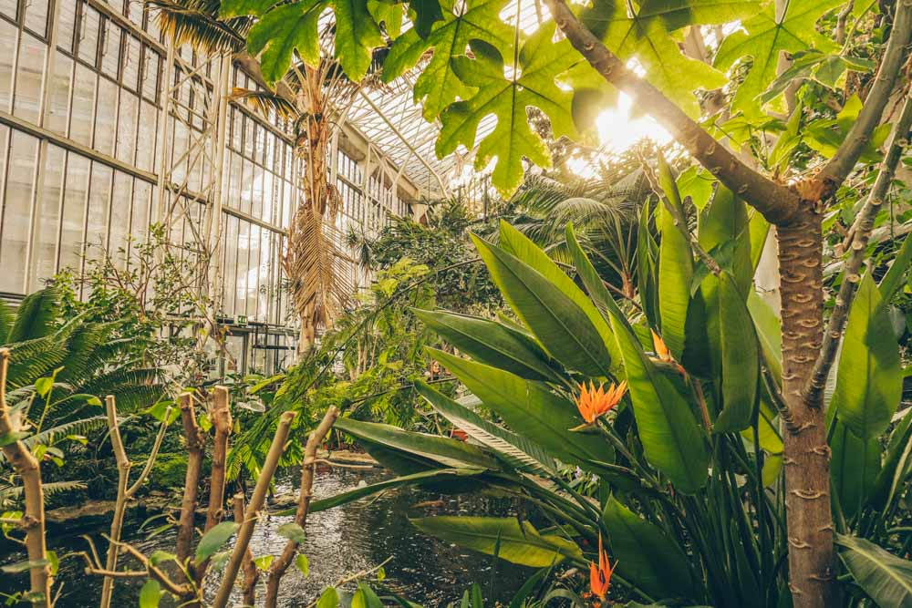 The Barbican Conservatory: The Secret Botanical Garden You Need to See