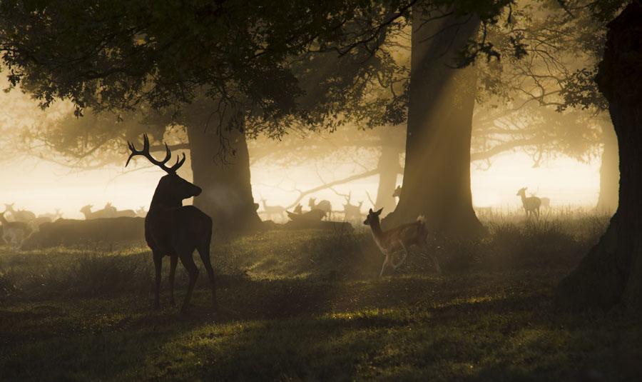 Seeing the deer