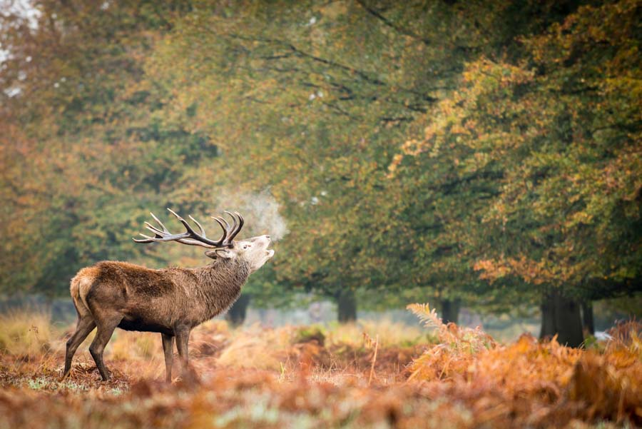 Time to Discover: Richmond Park – Exploring London's Famous Deer Park