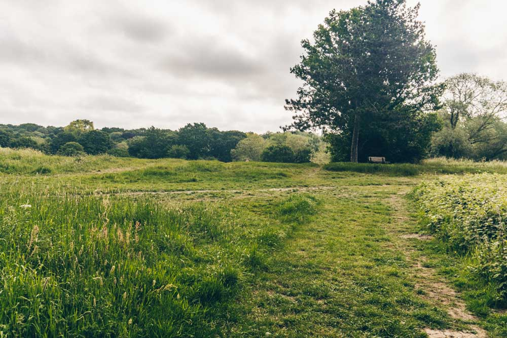 Hampstead Heath Walks