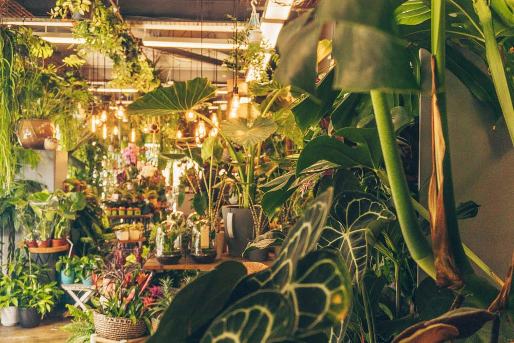 Plant Shops in London
