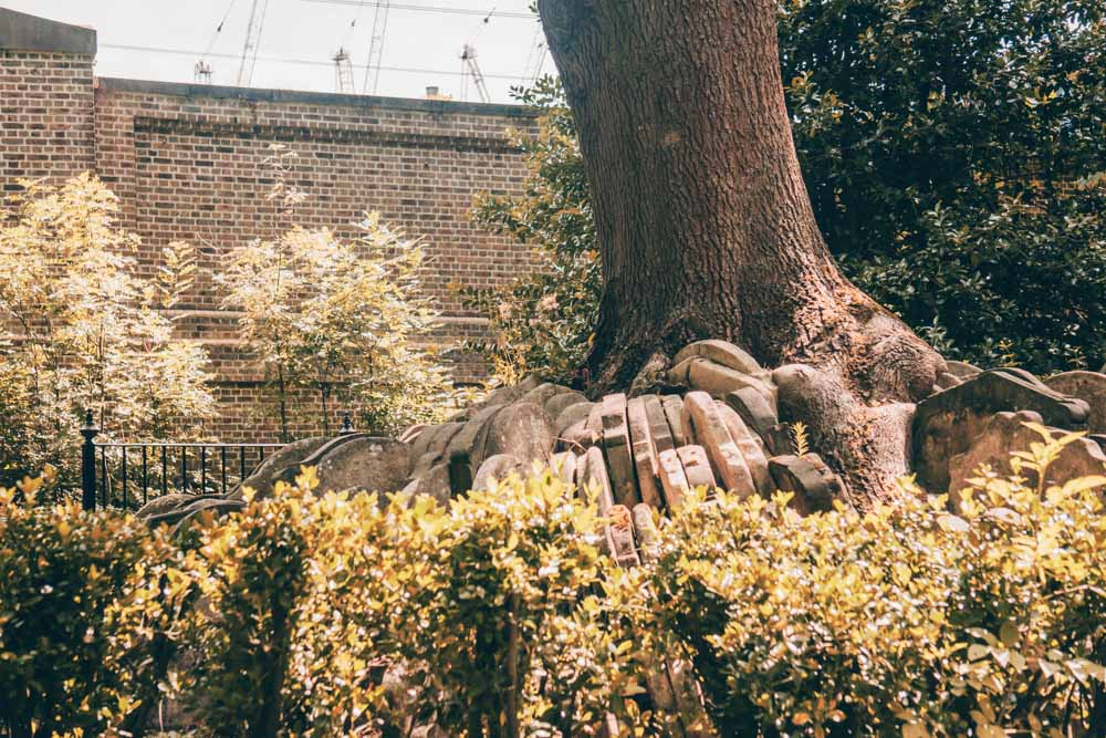 The Hardy Tree St Pancras Old Church