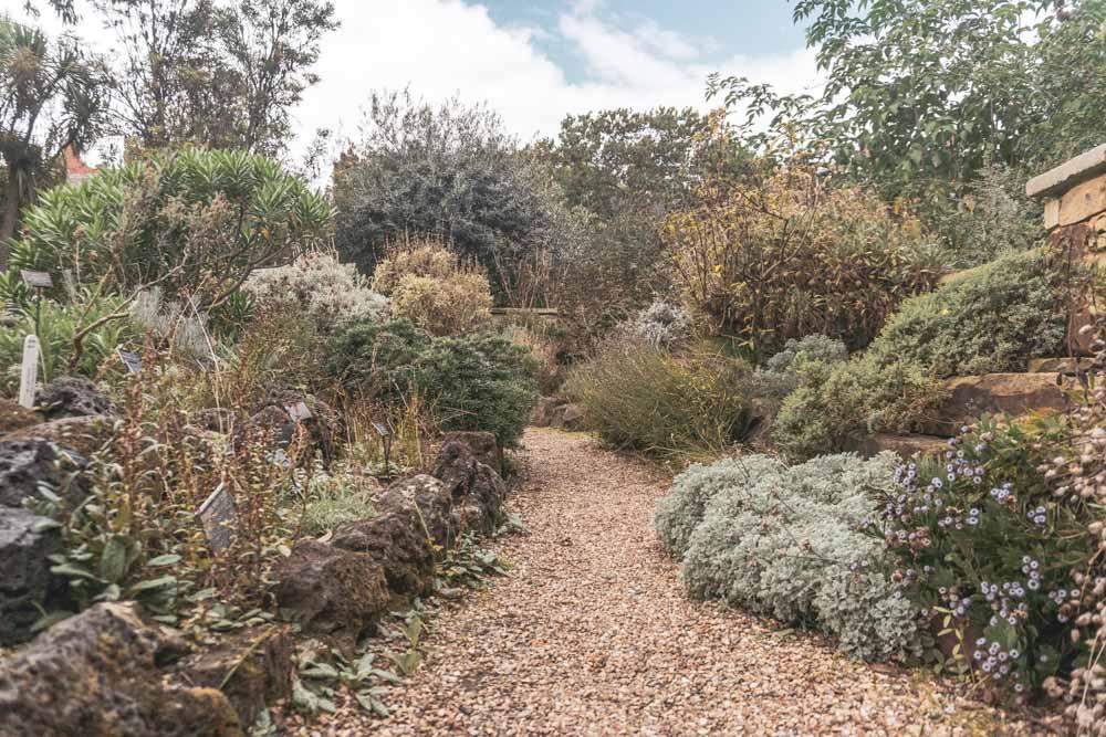 Chelsea Physic Garden – The Secret Botanical Garden You Need to Visit