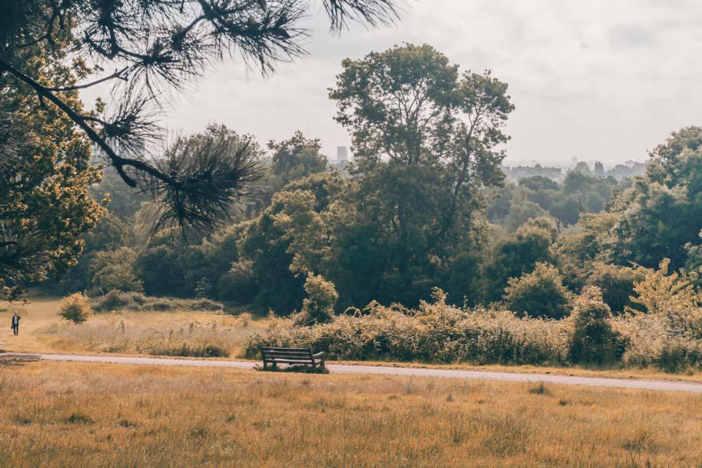 Hampstead Heath Autumn-1