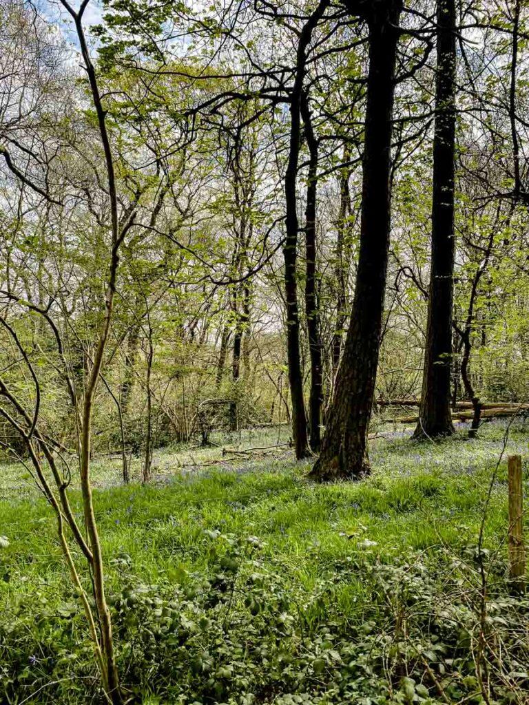 Banstead Woods