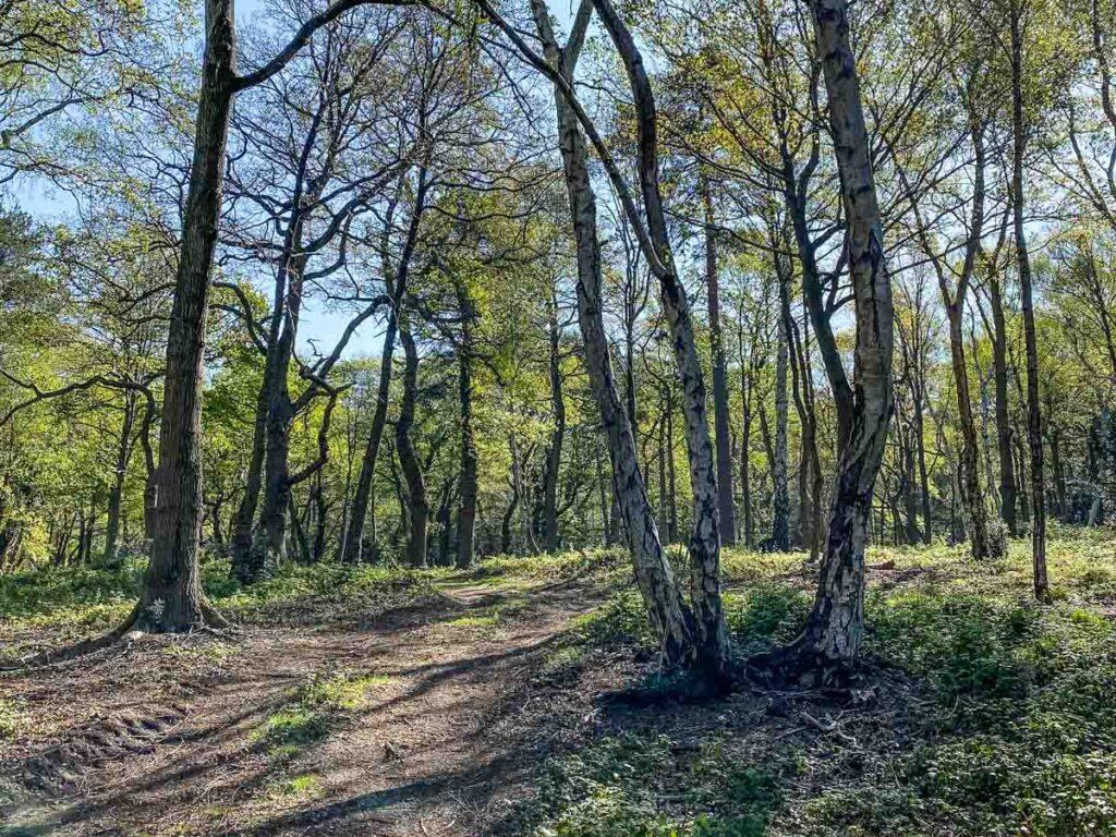 Forests Near London - Selsdon Woods