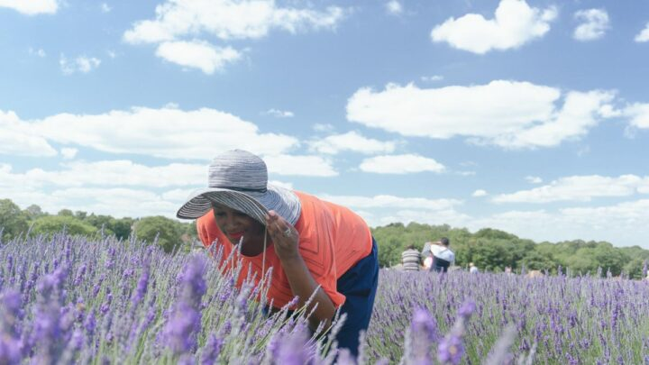 Mayfield Lavender: Visiting Banstead's Blooming Gorgeous Lavender Fields